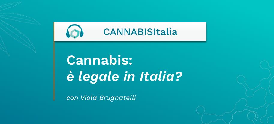 Cannabis: è legale in Italia? Cannabis Italia - Cannabiscienza - Sito