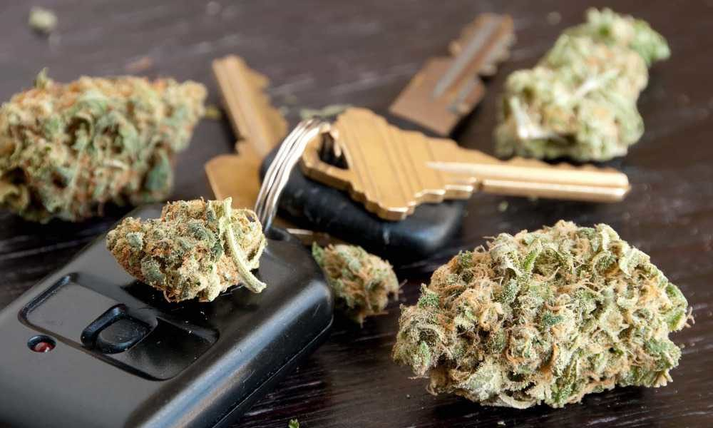 Cannabis e guida