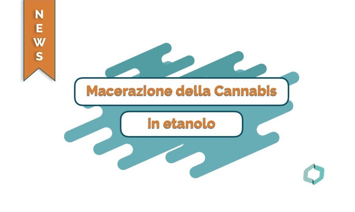 Macerazione della Cannabis in etanolo - Cannabiscienza