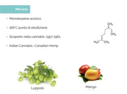 β-mircene - Cannabiscienza