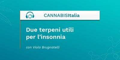 Due terpeni che aiutano per l'insonnia - Cannabis Italia - Cannabiscienza - Sito