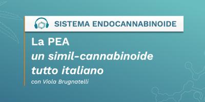 La Palmitoiletanolammide (PEA) un simil-endocannabinoide tutto italiano - Cannabis Italia - Cannabiscienza - Sito