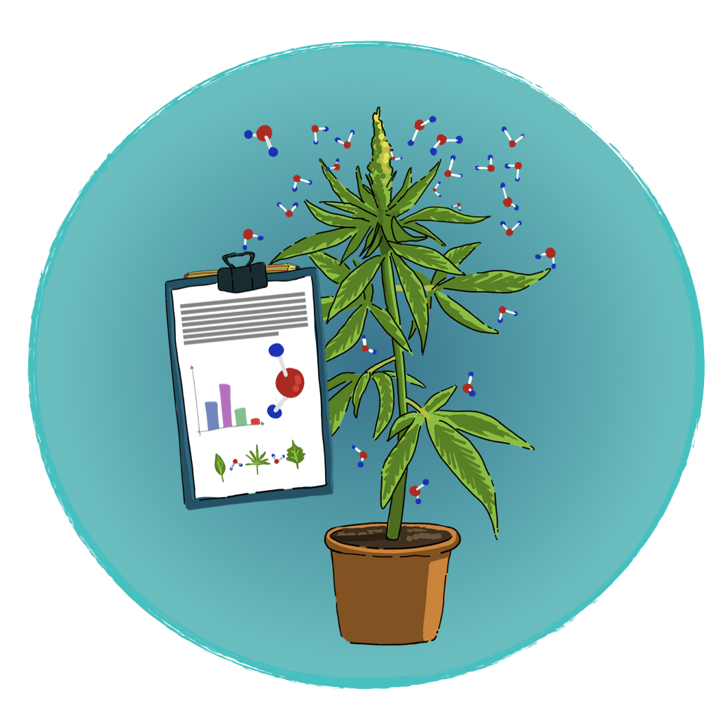Seminario - I terpeni della Cannabis - gli effetti sull'organismo - Cannabiscienza