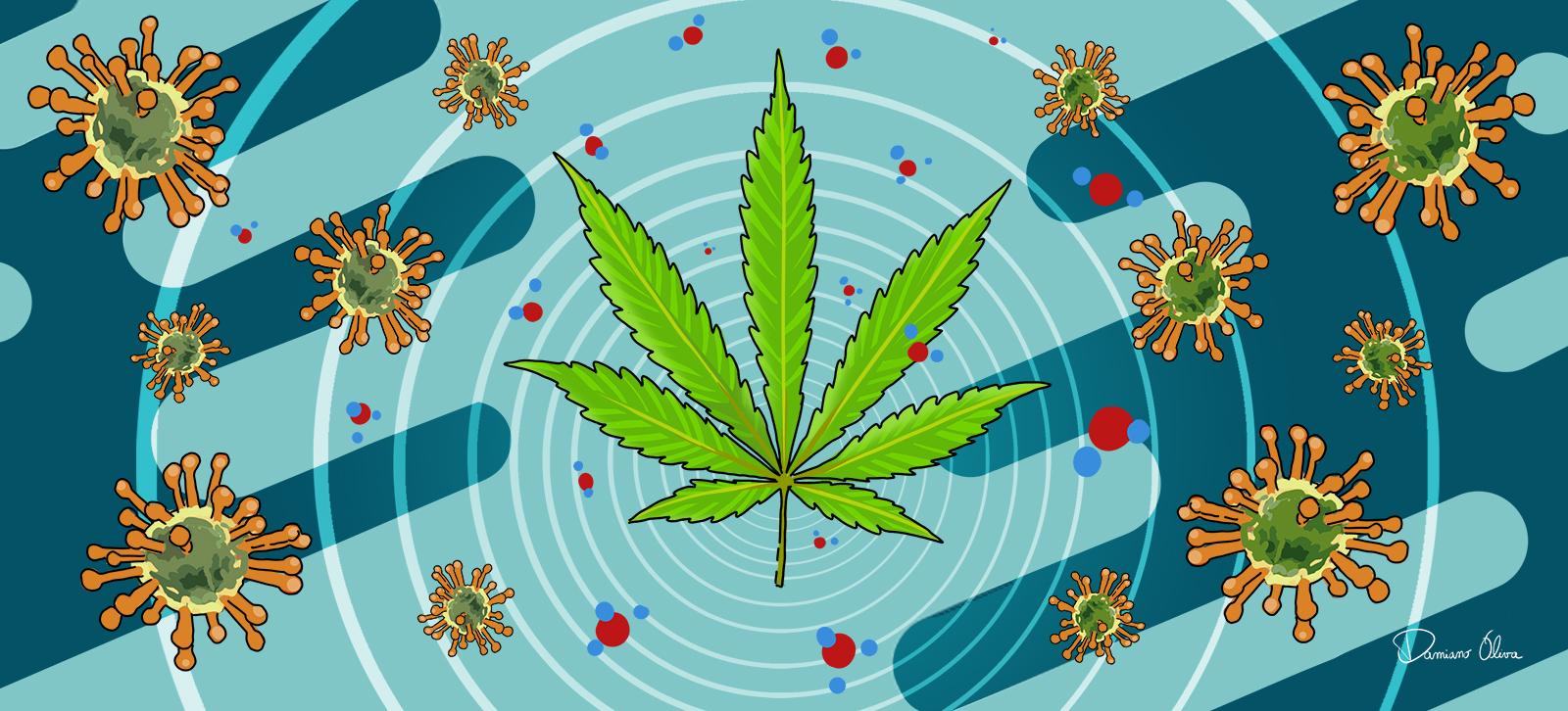 CBD e Covid-19 - Cannabiscienza