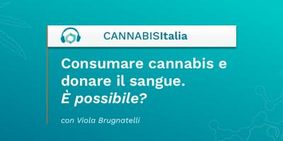 Consumare cannabis e donare il sangue. È possibile? - Cannabis Italia - Cannabiscienza - Sito