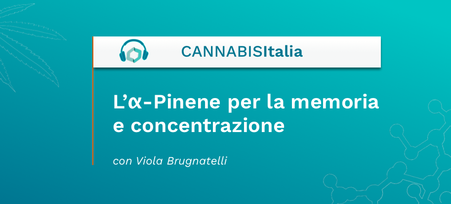 L'a-Pinene per la memoria e concentrazione - Cannabis Italia - Cannabiscienza - Sito