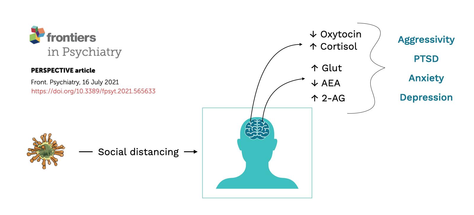 Omeostasi resilienza Sistema Endocannabinoide e covid-19 - Paper Image Viola Brugnatelli - Cannabiscienza